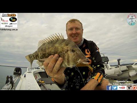 Fish That Snag - Tips, Tricks, Informations & Reviews - Soft Plastic Single Hop Retrieve