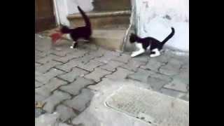 Kedi Eti Yedi mi ?