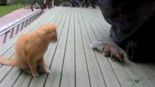 猫のエサを警戒しながらも奪って去っていくリス