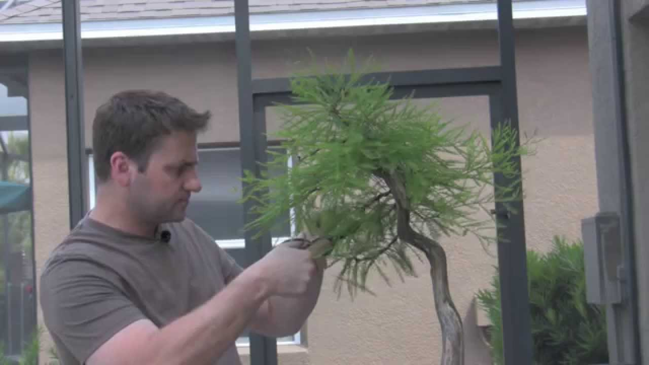 how to get tree trimming license