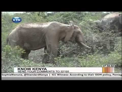 Know Kenya : Mwaluganje elephant Sanctuary