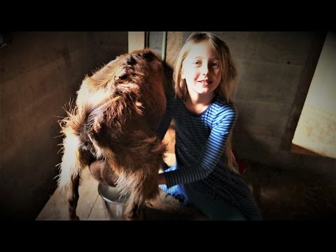 How To Milk a GOAT | Taught By A 7 Year Old