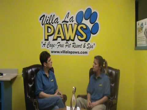 Selecting a Dog Trainer: Dog Training Tips from Villa La PAWS