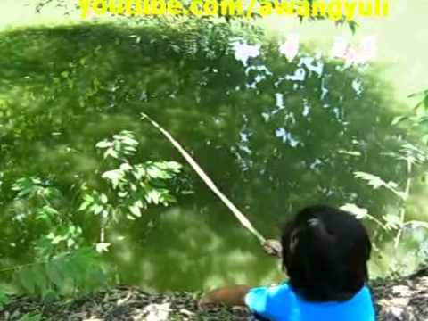Mancing Ikan Patin~Lele 4kg Up di Empang [pesta strike]