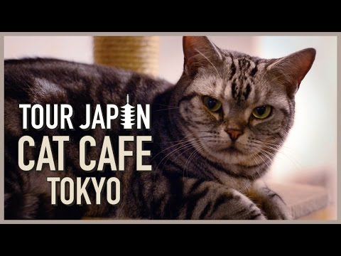 Cuteness Overload: Visiting a Cat Cafe in Tokyo