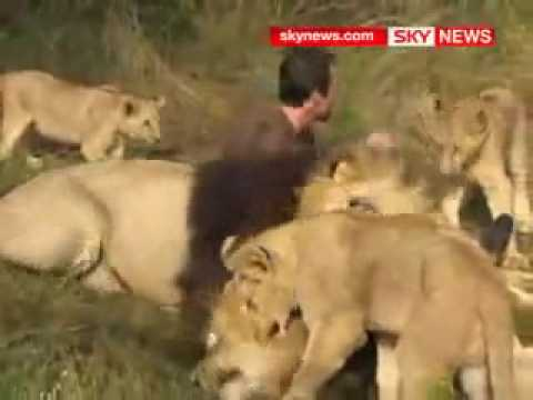 Jehovahs Witnesses Our Beliefs Playing with lions