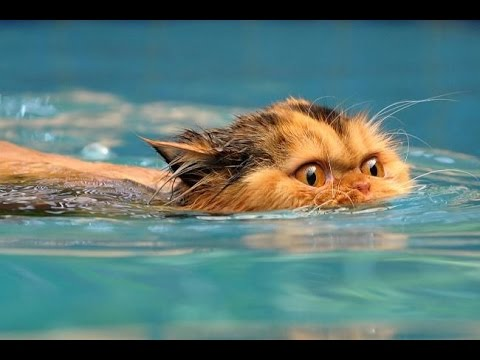 FUNNY VIDEOS Funny Cats Videos Funny Animals Cute Pets Try Not To Laugh