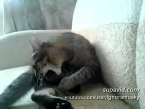 Sebedestruktivní kočka :D