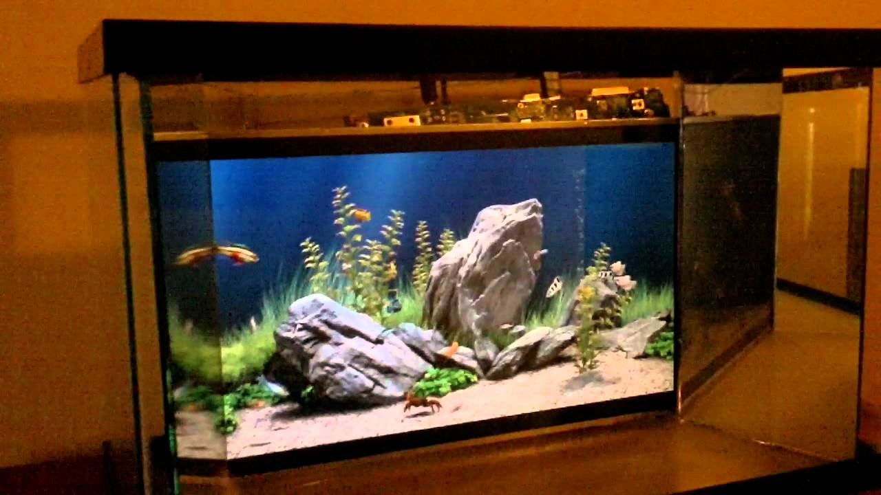 digital fish tank youtube