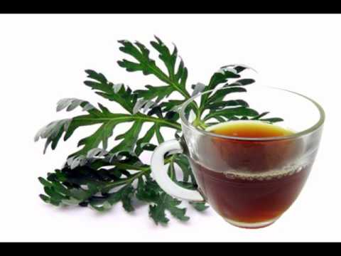 Wormwood Tea Health Benefits