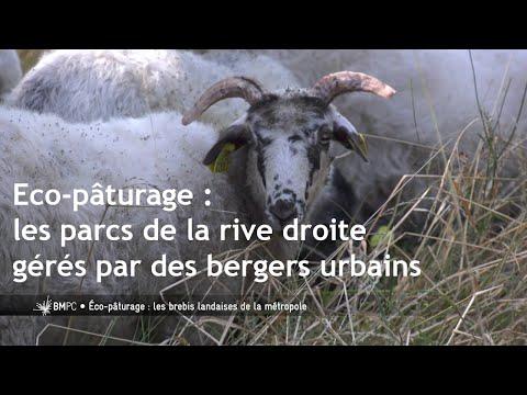 Bordeaux : éco-paturages urbains