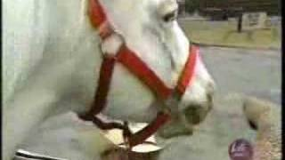 Wagen en Paard