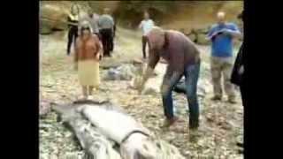 Calamar gigante encontrado en España