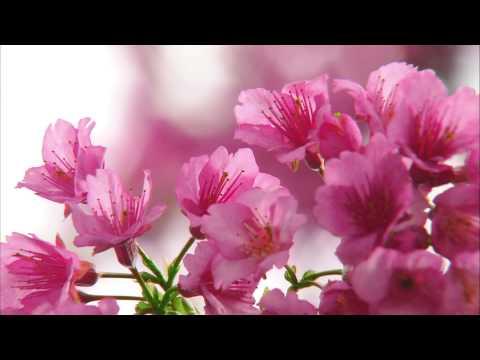 Be.Okinawa(Hongkong ver.)