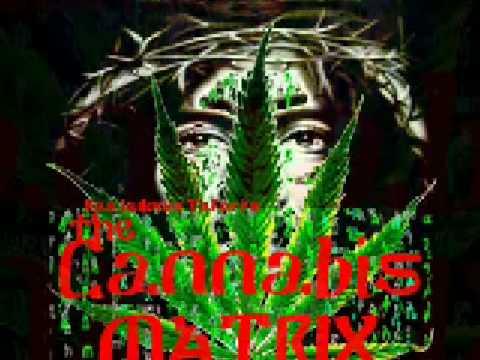 Cannabis Matrix Genesis Quot Forbidden Fruit Quot By Rasiadonis