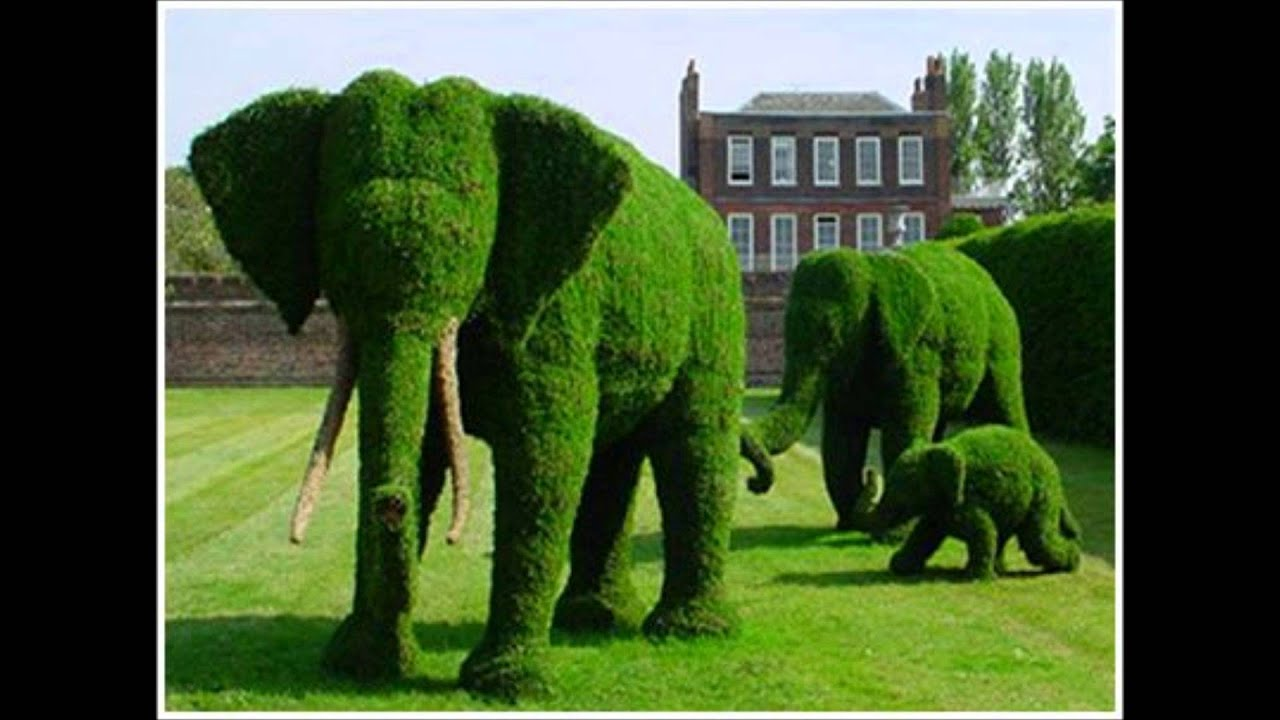 how to cut hedges into shapes