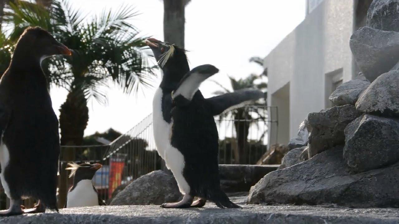 Le pingouin qui voulait s'envoler