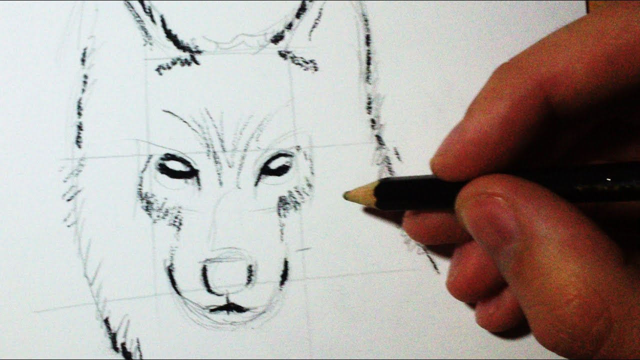 Comment dessiner un loup croquis face profil tuto youtube - Dessin de loup simple ...