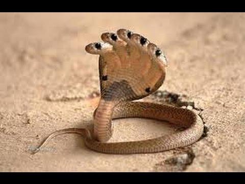 Top 10 loại rắn 'dị' nhất thế giới