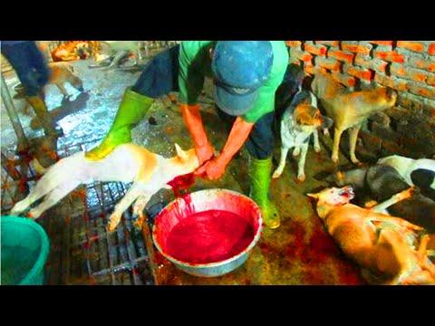 [Rợn Người] Hành Trình Đến Lò Mổ Của Các Chú Chó
