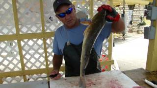 Filleting Trout And Redfish
