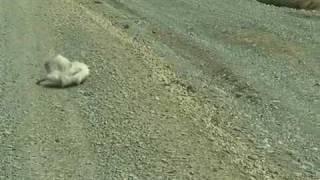 Extra�o animal encontrado en Mexico