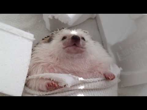 A Hedgehog Wrecking Ball