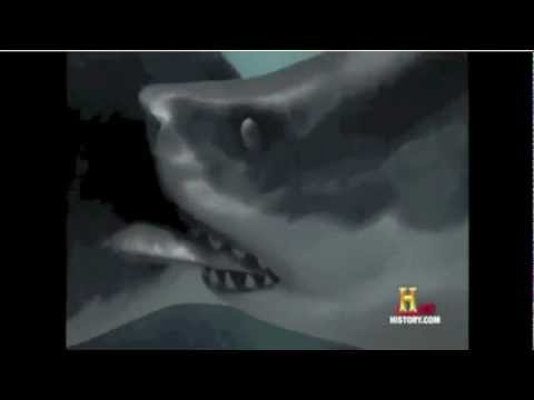 Carcharocles Megalodon vs. Livyatan melvillei(Remake)