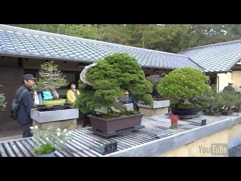Bonsai Garden in Showa Kinen Park 昭和記念公園の盆栽苑