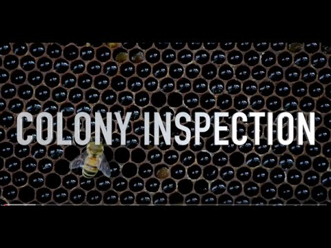 Colony Inspection