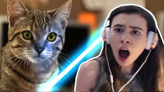 REACTING TO JEDI KITTENS!!!