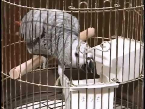 Phim hài Nhật Bản - Chó & Khỉ thông minh phần 1 - Tập 13 [HD]