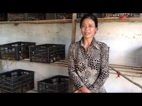 Bạn của nhà nông: Kinh nghiệm nuôi nhốt chim bồ câu 9