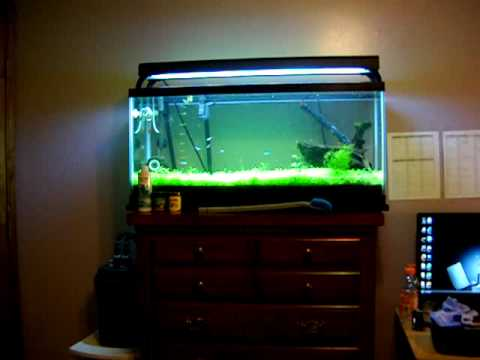 New 30 gallon planted fish tank 11 20 2009 youtube for 30 gallon fish tanks