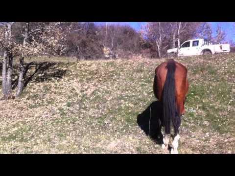 Video Caballo retirado en Cavalls Wakan Autor: Imgagen Miniatura Youtube