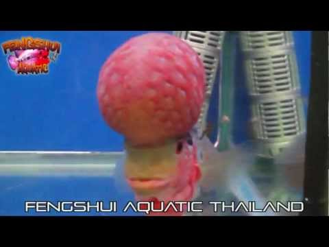 October Ornamental Fish Show Bangkok Thailand Part 1