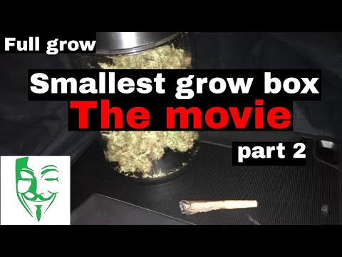 Autoflower Micro grow Harvest FULL CFL LED GROW from seed to harvest