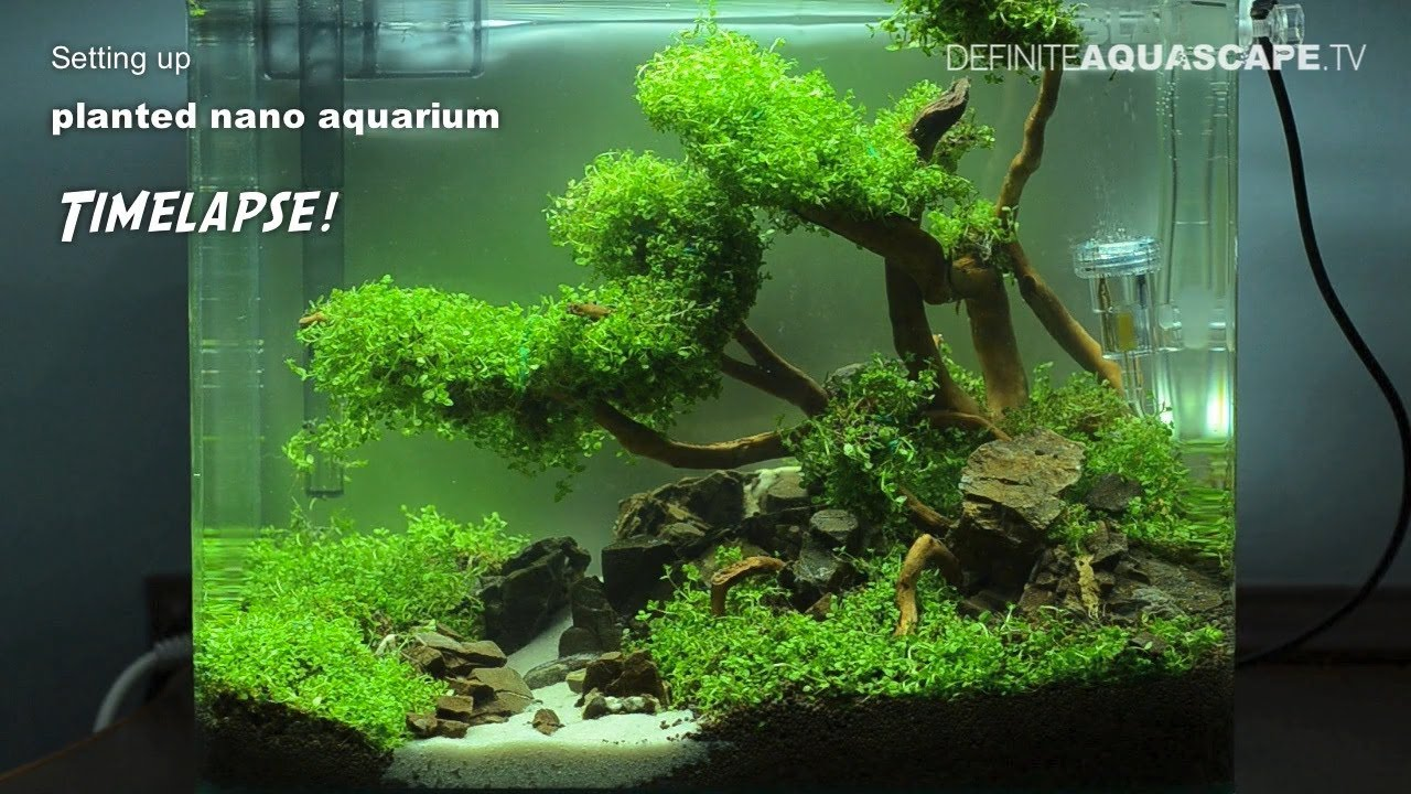 Small nano aquarium fish tank tropical -  Setting Up Planted Nano Aquarium Timelapse Youtube Marine Nano Aquarium 30 Litre Tropical Fish
