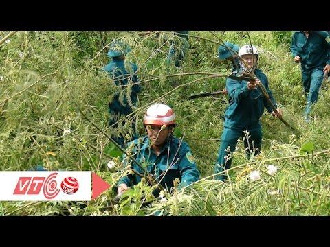 Cây mai dương phá vỡ hệ sinh thái Việt Nam?   VTC