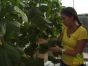 Urban Farming: Hydroponics in the City