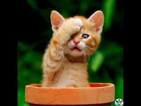 Những chú mèo tinh nghịch