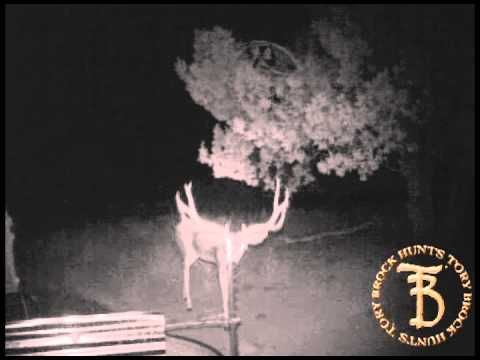 Trail Camera Mule Deer Part 3 - Tory Brock Hunts