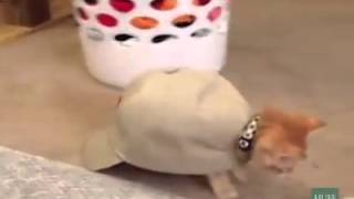 Gatos que se creen tortugas