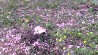 Se taie nemilos pădurea de la Durlești