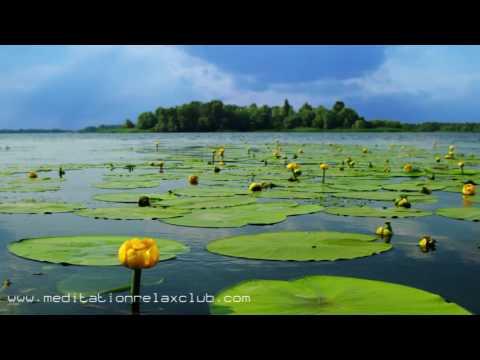 Musica de Serenidad y Relajacion: 3 HORAS de Musica Calma y Sonidos de la Naturaleza