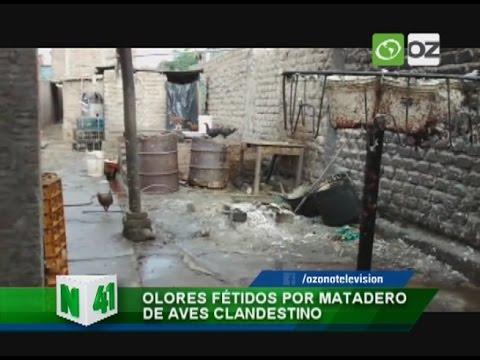 Olores fétidos por matadero de aves clandestino - Trujillo