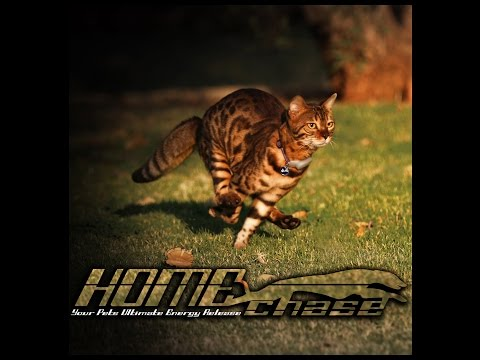 HOMEchase® Your pets ultimate energy release system
