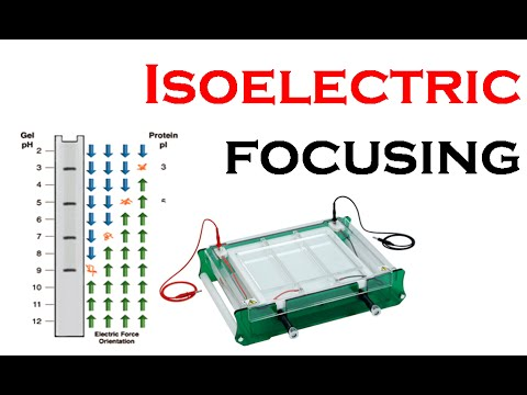 Isoelectric focusing -txcFIz6Y-1A
