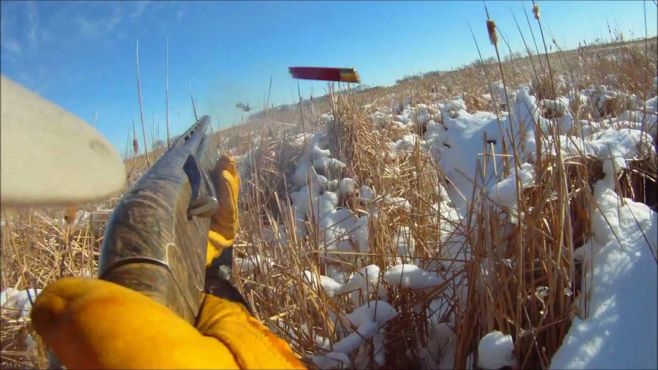 Late season south dakota pheasant hunting youtube for South dakota out of state fishing license