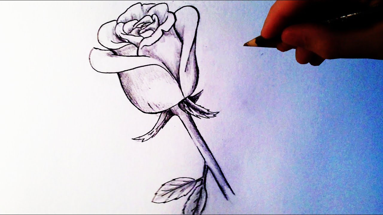 Easy Drawing Of A Rose How to Draw a R...
